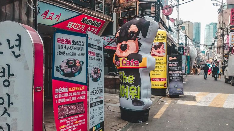 Un café avec des chiens et chats à Hongdae