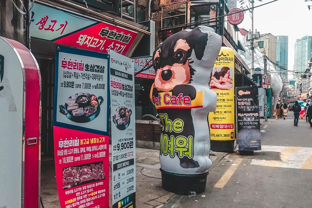 cafe-a-chats-chiens-seoul-hongdae-1