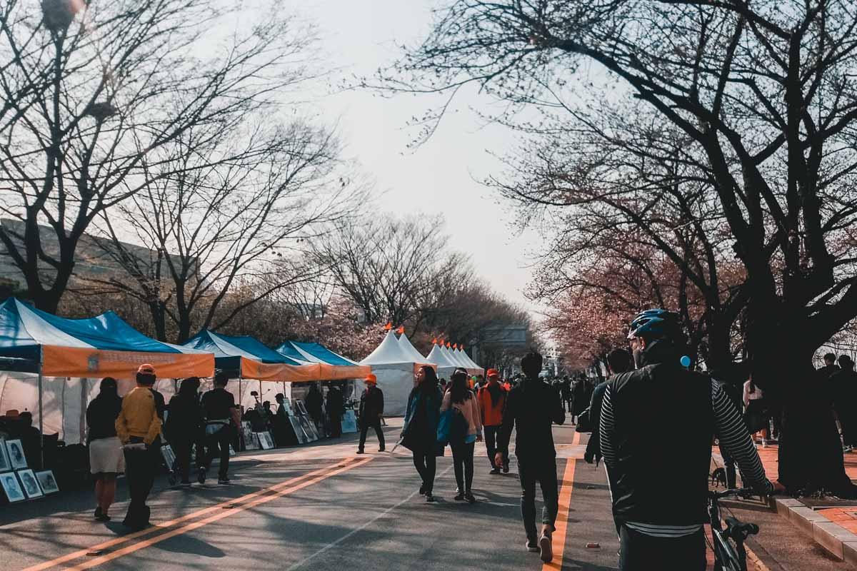 Yeongdeungpo Yeouido Spring Flower Festival Seoul