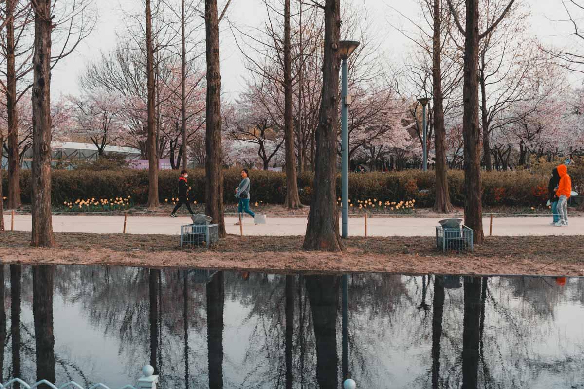 Seoul Forest Corée du Sud