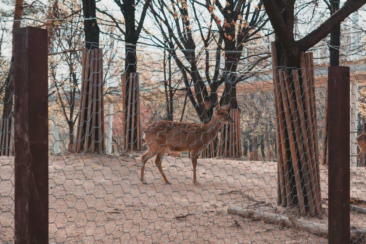 Seoul Forest : une biche