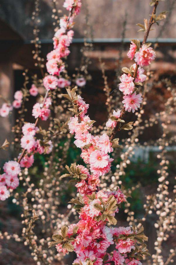 Seoul Forest fleurs