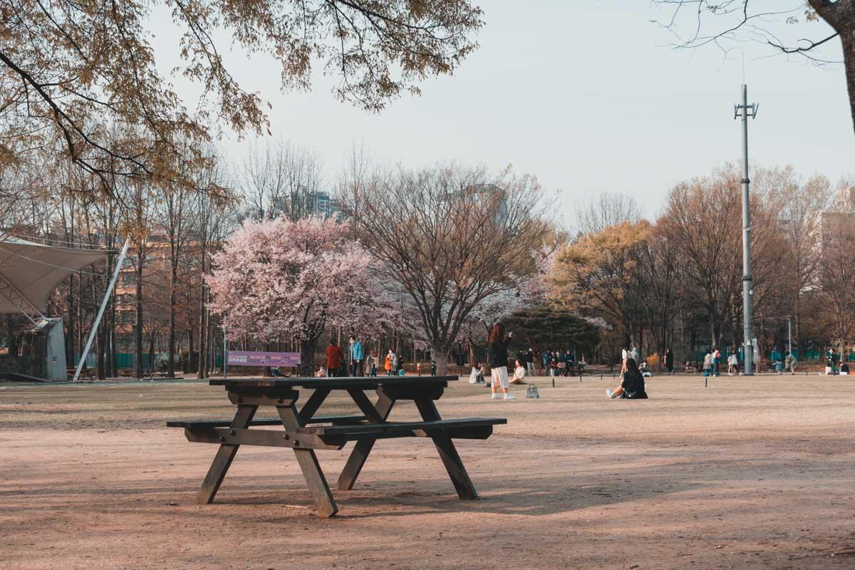 Seoul Forest table de pique-nique