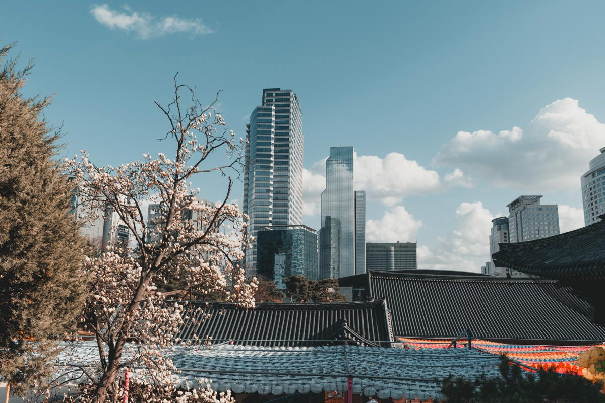 Voyager au printemps en Corée du sud